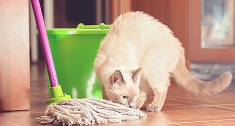 تمیزی حیوانات